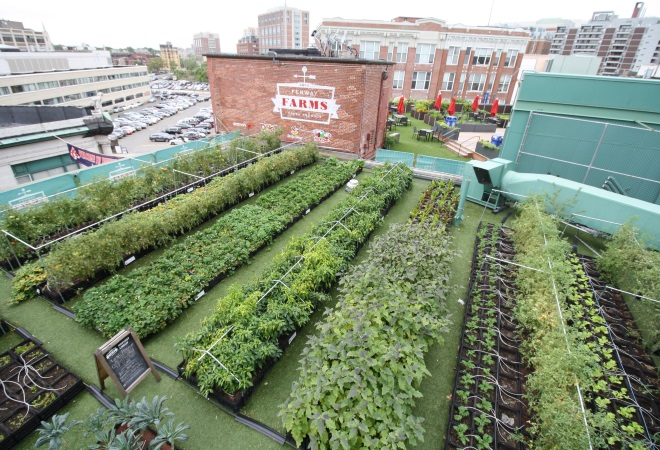 Green City Growers maintains Fenway Farms, a 5,000-square foot rooftop farm that provides fresh, organic fruit and vegetables to the Fenway Park EMC Club restaurant in Boston.